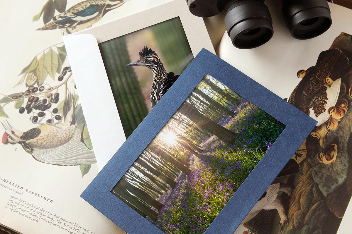 641df7fb08a16 Send Joy with Photo Insert Cards Cards with photo insert for nature  photography