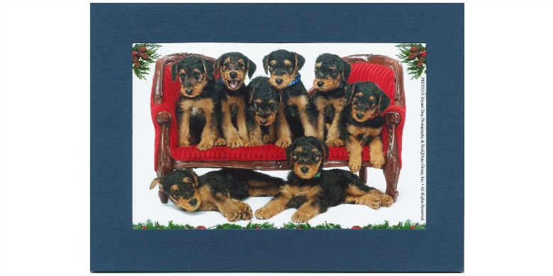 dog-photo-card