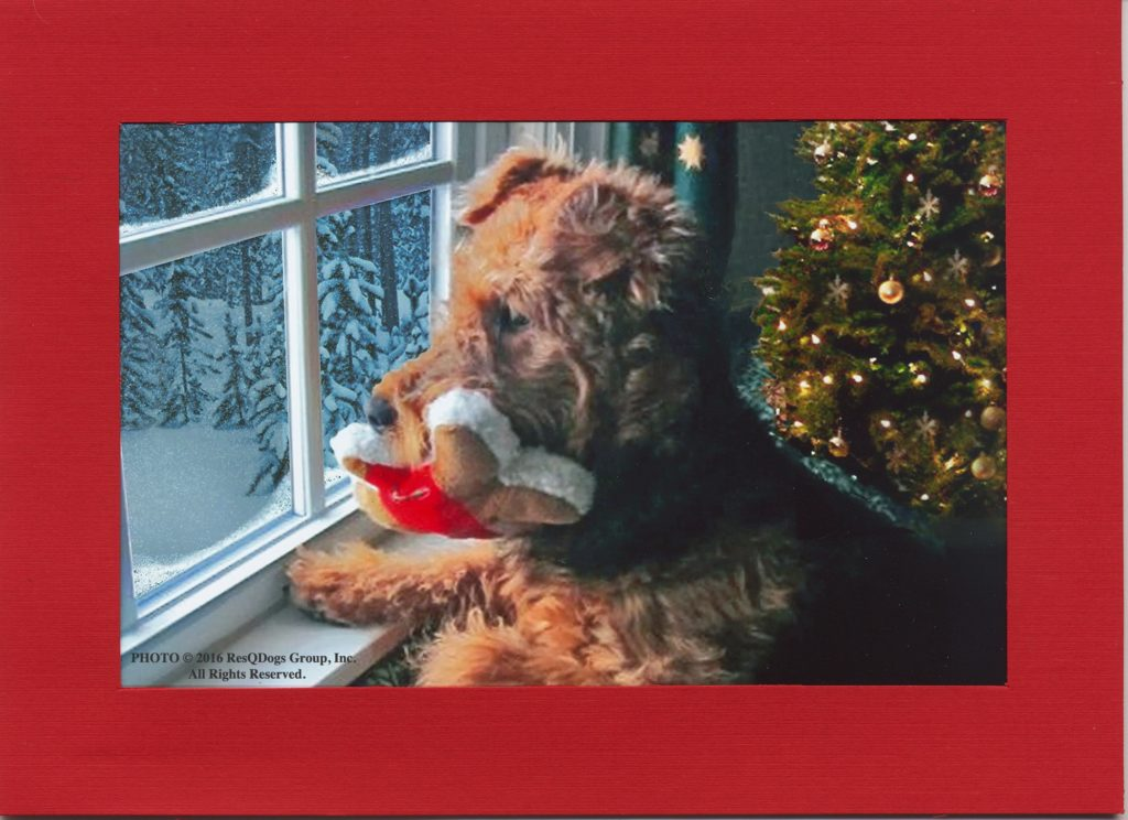 Dog Christmas Card © 2016 ResQDogs Group, Inc.