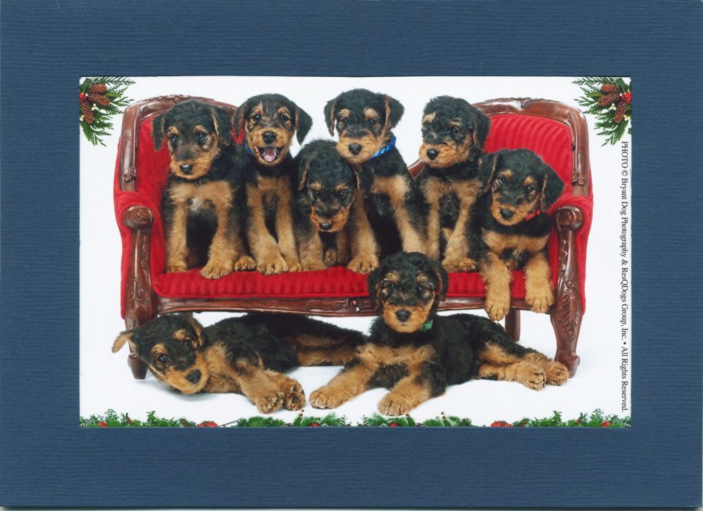 © Bryant Dog Photography & ResQDogs Group, Inc. - Dog Holiday Card